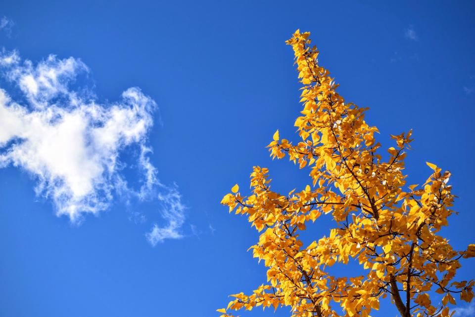 blue, sky, clouds, yellow, leaves, trees, nature, fall, autumn, sunshine