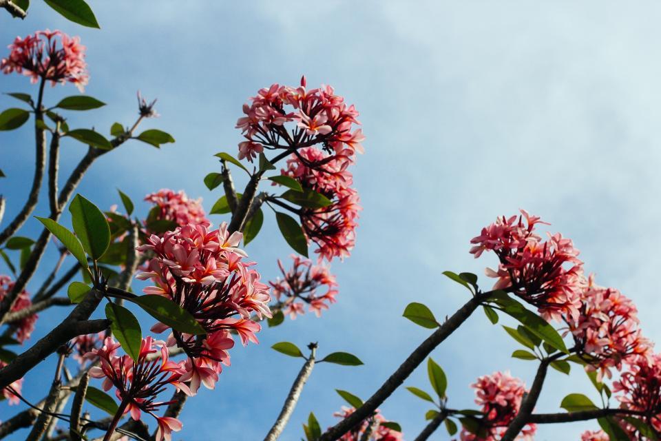 blue, sky, red, flowers