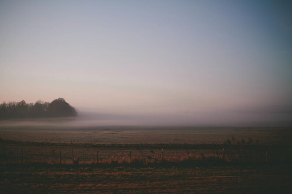 fog, haze, hazy, fields, grass, country, trees, farm, oudoors, bushes
