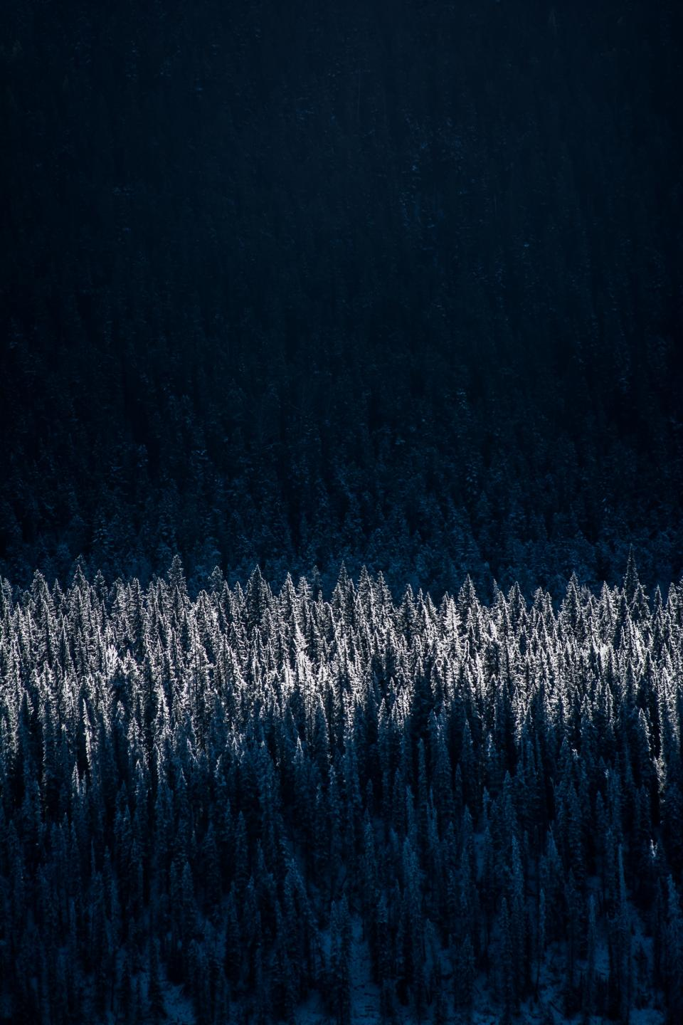 trees, forest, woods, nature, dark