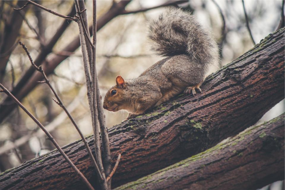 squirrel, animal, trees, branches