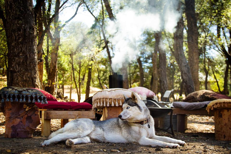 dog, husky, pet, animal, pillows, wood, benches, trees, forest, woods, smoke, nature