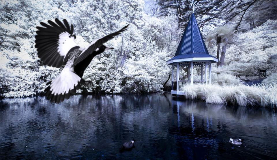 gazebo, birds, lake, water, trees, nature