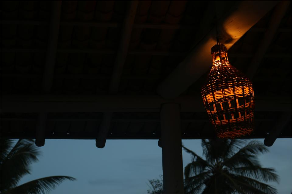 lantern, night, evening, palm trees