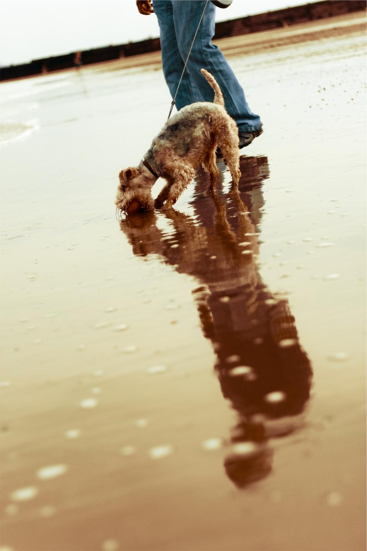 dog, pet, walking, leash, ball, wet