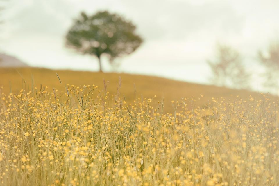 country, outdoors, field, trees, flowers