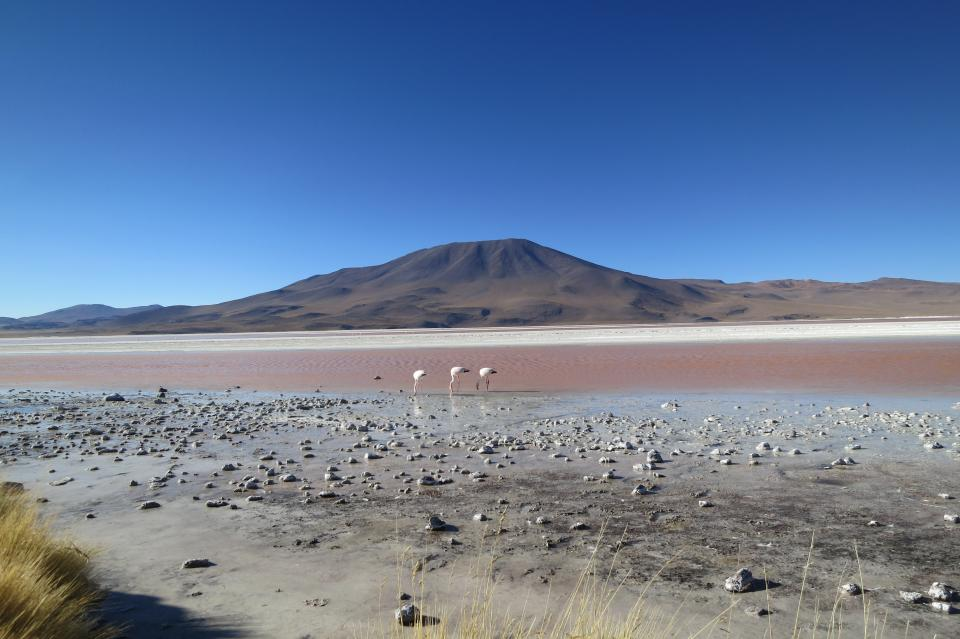 Laguna Colorada, Bolivia, landscape, mountains, sky, sand, birds