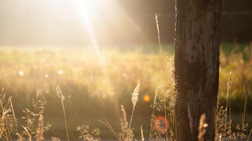 sunshine, sunrays, fields, tree, wood, bark, nature