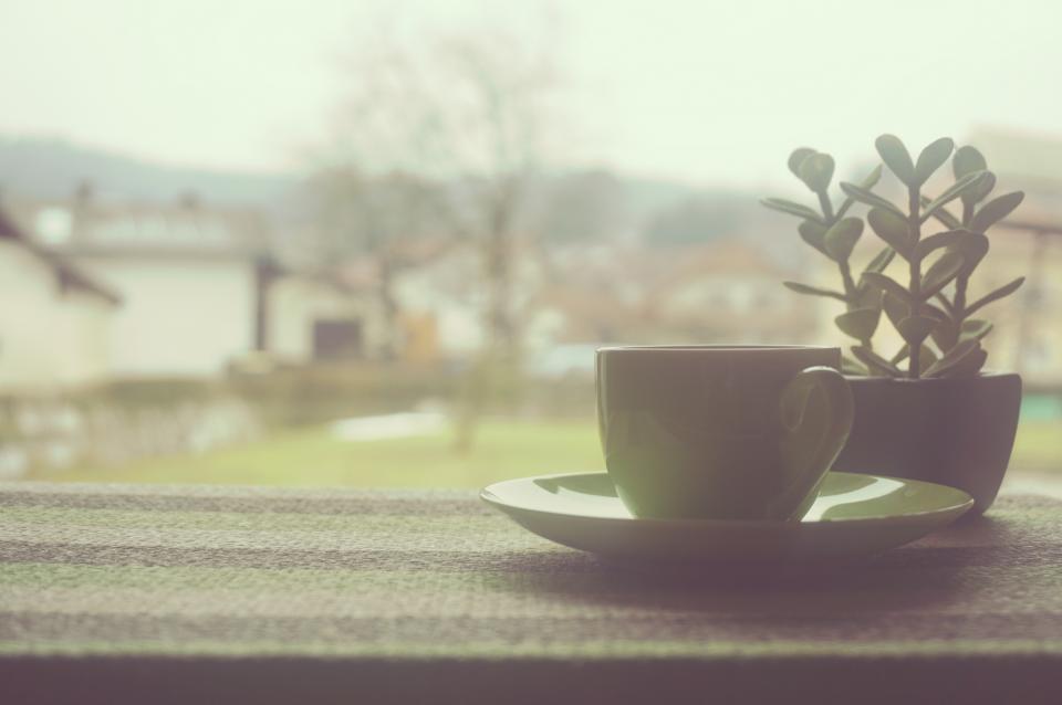 coffee, cup, tea, window, home, office, business, work, plant, decor
