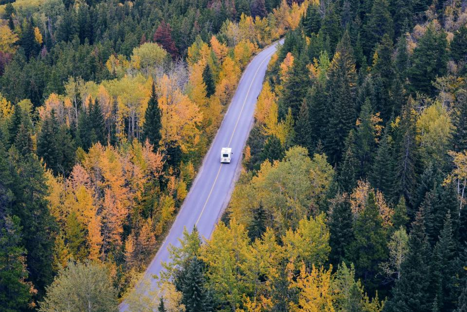 trees, forest, woods, nature, road, travel, transportation, vehicle, autumn, fall