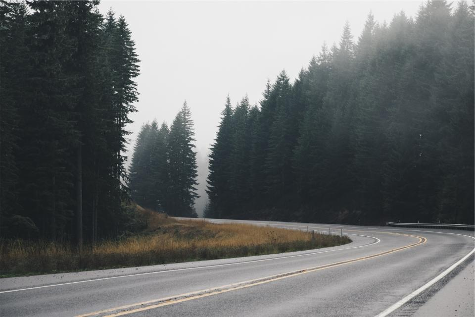 road, pavement, trees, fog