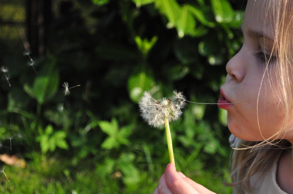 blowing, dandelion, flower, child, young, girl