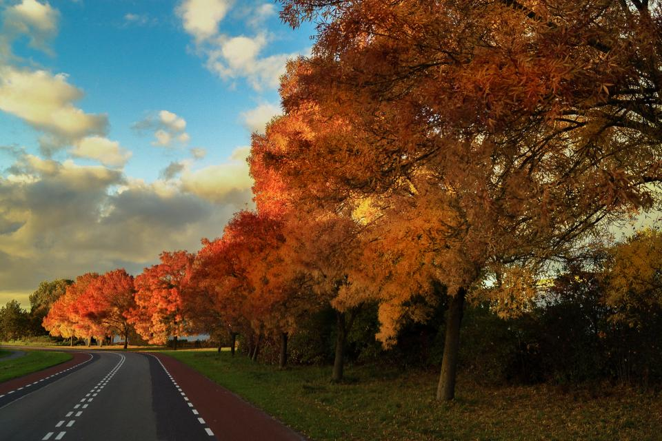 autumn, fall, trees, leaves, colors, road, sky, rural