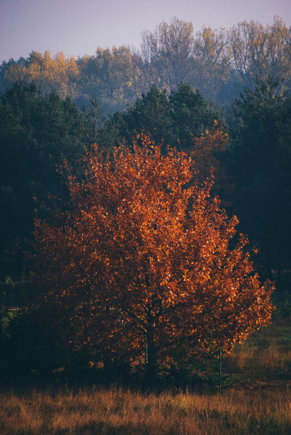 trees, forest, woods, grass, nature, fall, autumn