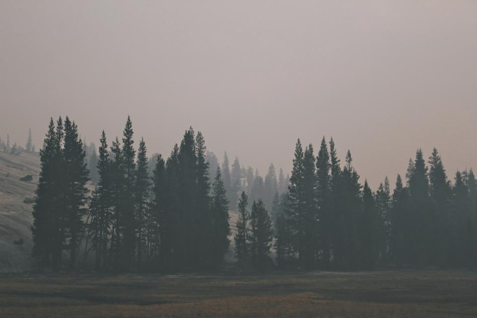 trees, forest, woods, nature, foggy, grey, landscape, nature, field, grass, sky