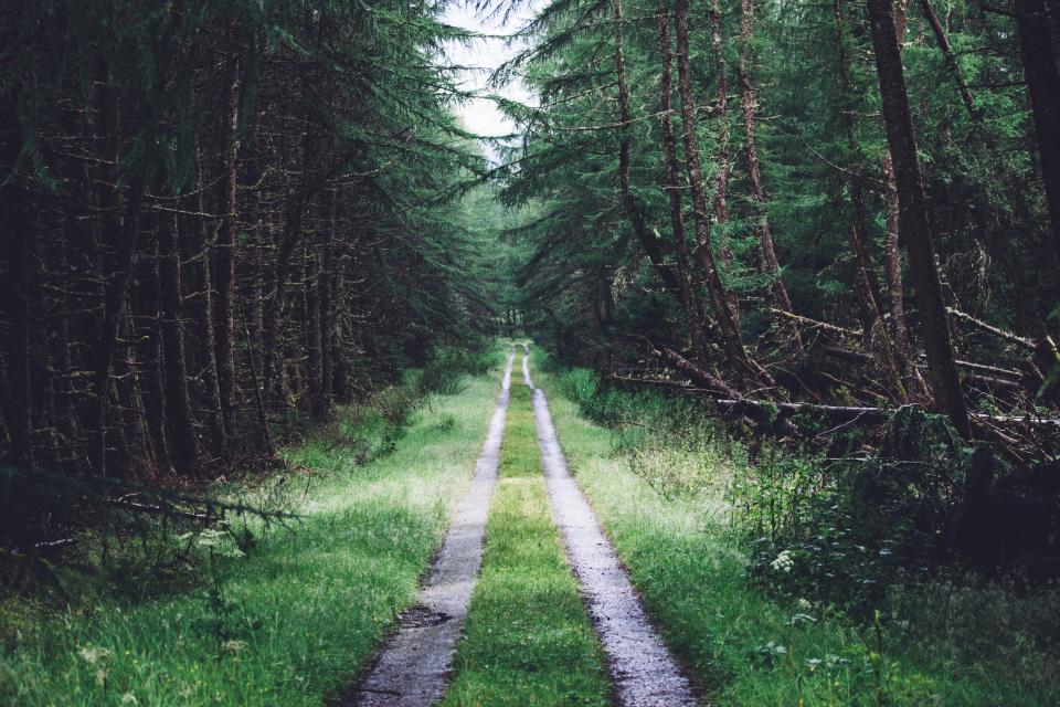 nature, outdoor, green, grass, forest, trees, plant, road, path, sky, wood, peaceful