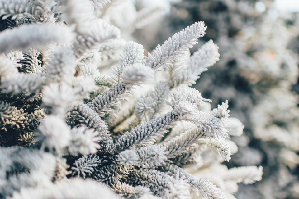 tree, nature, pine, winter, white, bokeh, outdoors