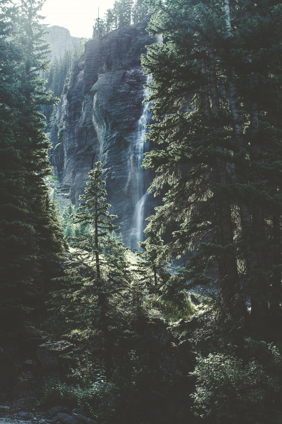 pine, trees, leaves, forest, hill, rocks, water, fall, waterfalls, nature