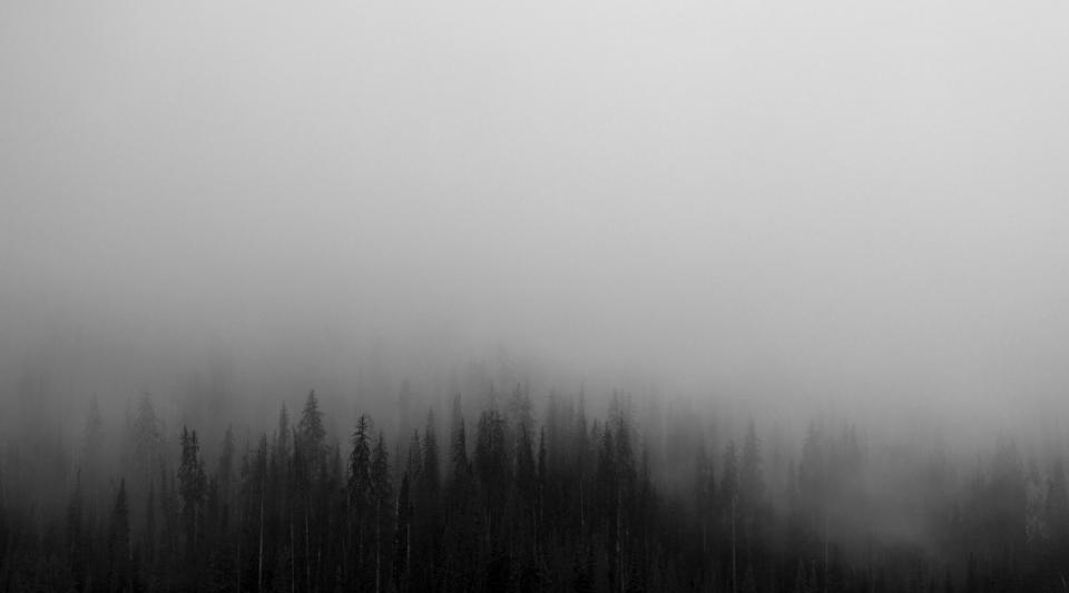 trees, forest, woods, fog, foggy, grey, sky, nature