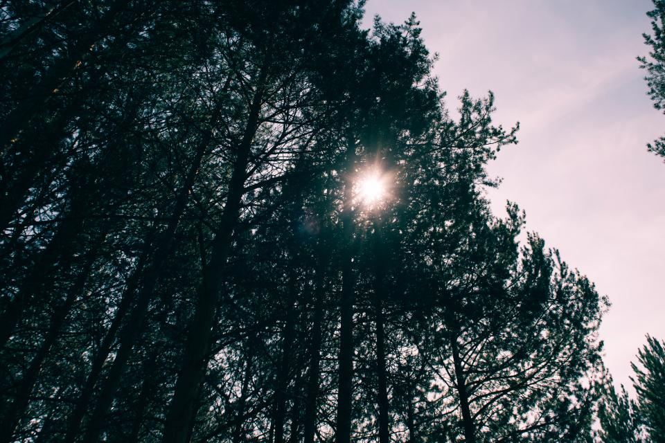 trees, forest, nature, sky, sunlight