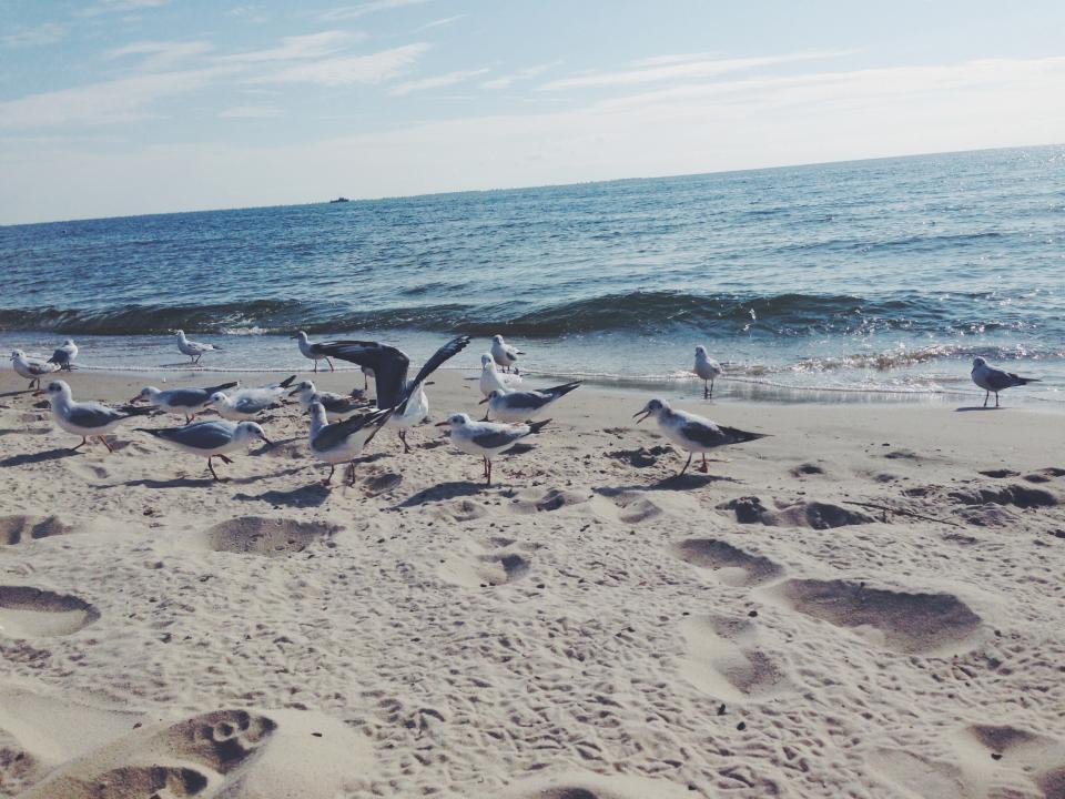gulls, beach, sea, blue, water, waves, shore