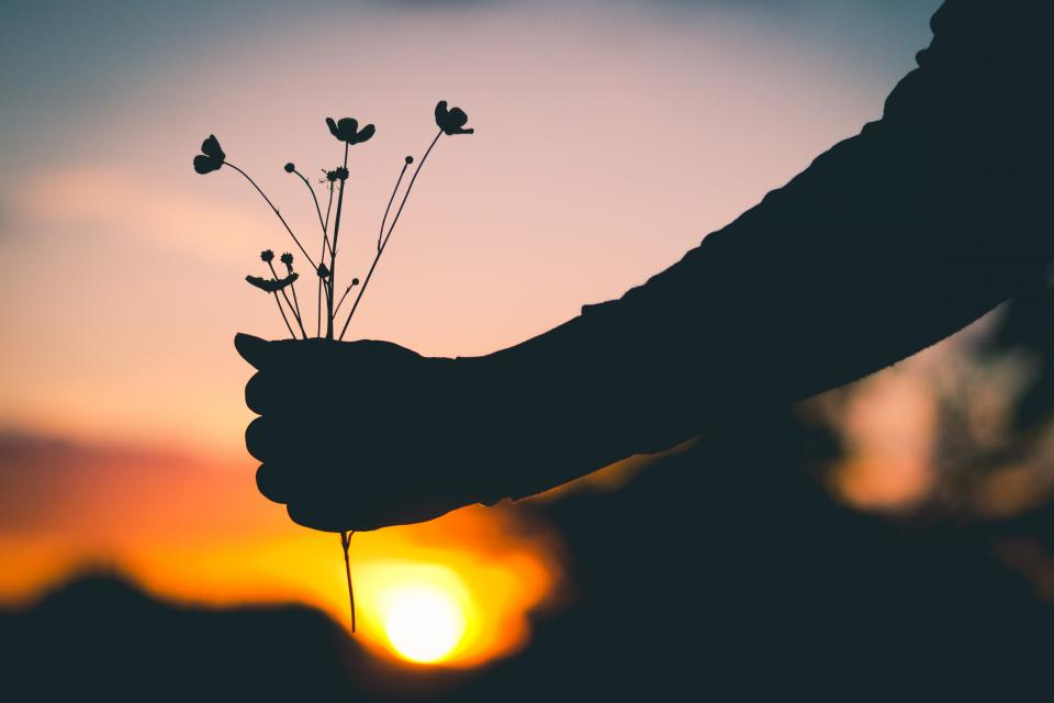 holding, flowers, silhouette, sunset