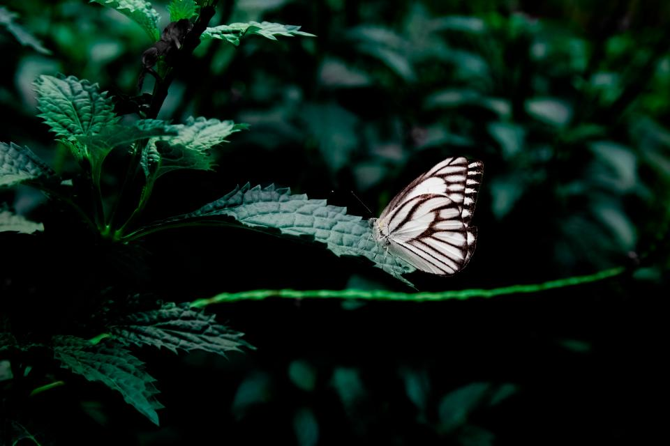 butterfly, plants, leaves, green, nature