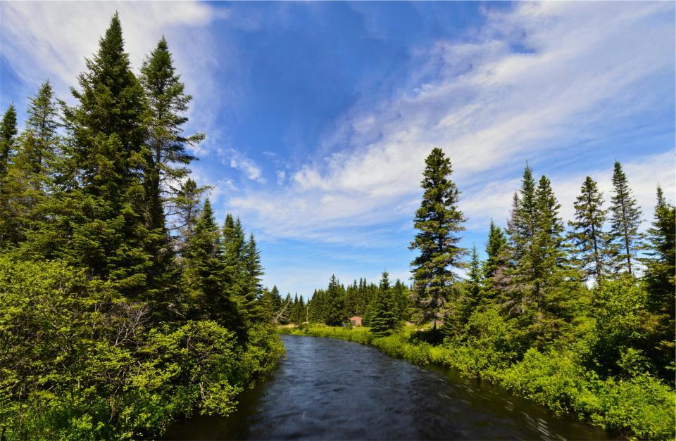 river, water, trees, nature, blue, sky, shrubs, bushes