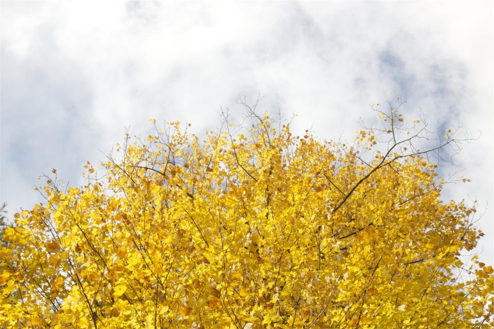 trees, yellow, leaves, autumn, sky, clouds