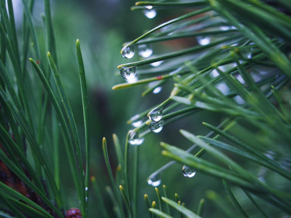 green, grass, plants, raining, rain drops, wet, nature