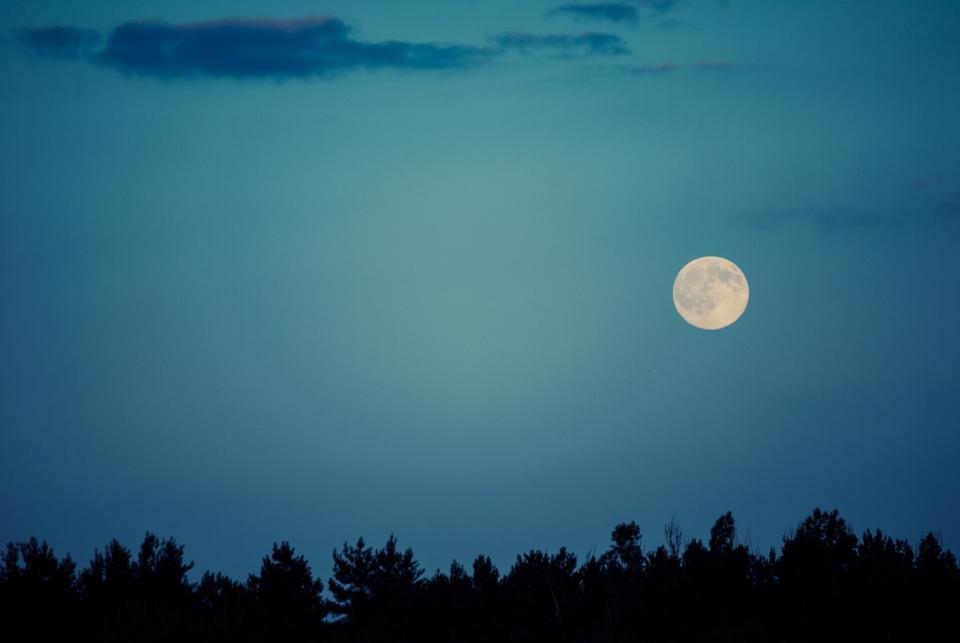 moon, sky, night, dark, silhouette, tree line, nature, dusk, landscape