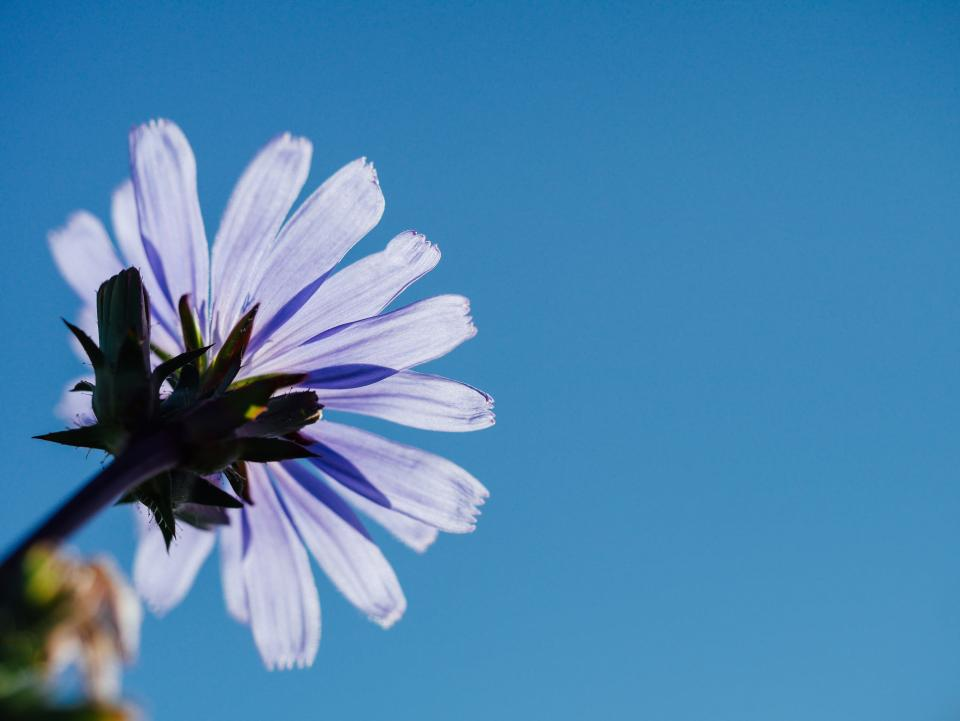 purple, flower, blue, sky, sunshine, summer, nature