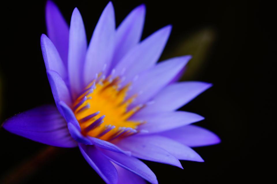 purple, flower, nature