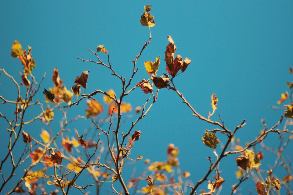 leaves, branches, tree, blue, sky, fall, autumn, nature
