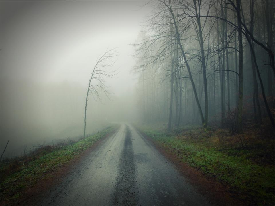 dirt, road, fog, dark, trees, forest