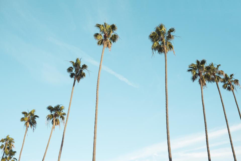 palm trees, blue, sky, sunshine, summer, tropical, vacation, travel, trip