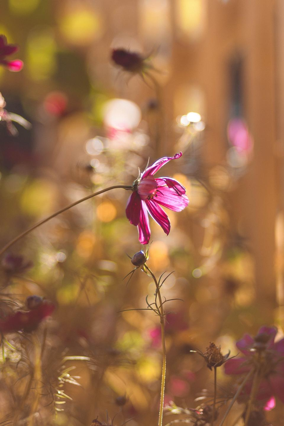 flowers, nature, blossoms, branches, bed, field, stems, stalk, petals, purple, buds, still, bokeh, outdoors, garden