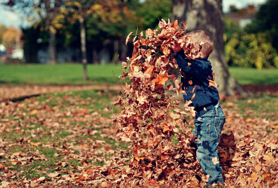 leaves, fall, autumn, boy, child, kid, playing, fun, nature, outdoors, sunshine, park, trees, grass