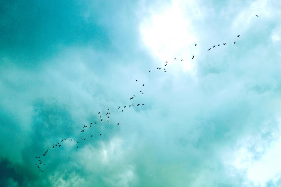 blue, sky, clouds, flock, birds, animals