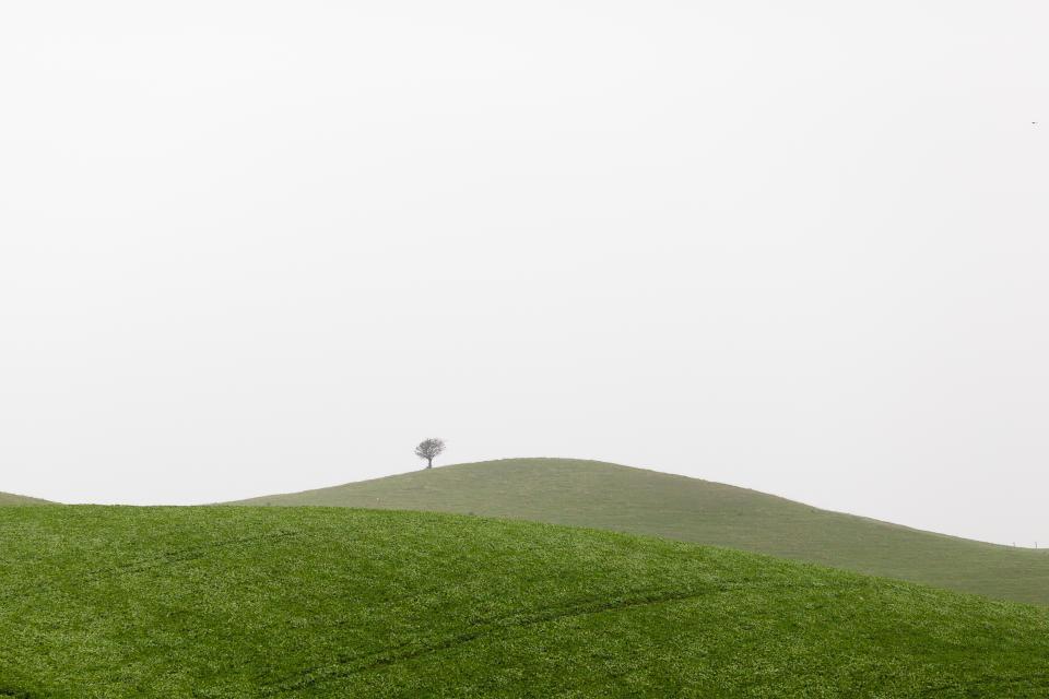 green, grass, hill, tree, nature, grey, sky, outdoors
