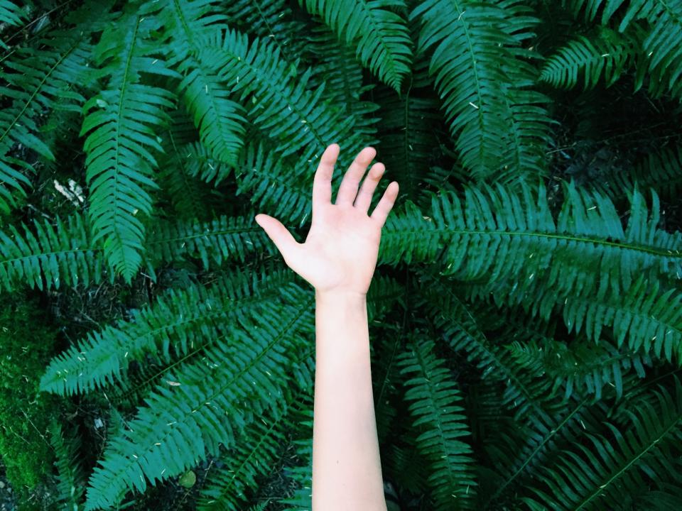 hand, green, trees, plants, leaves, nature, branches