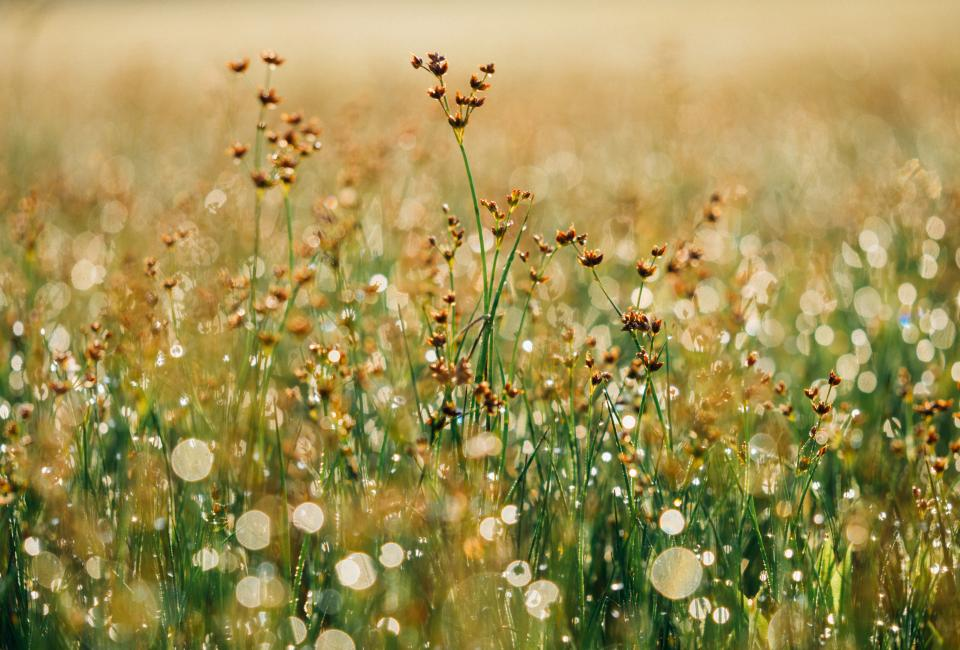 flowers, plants, grass, field, nature, sunshine