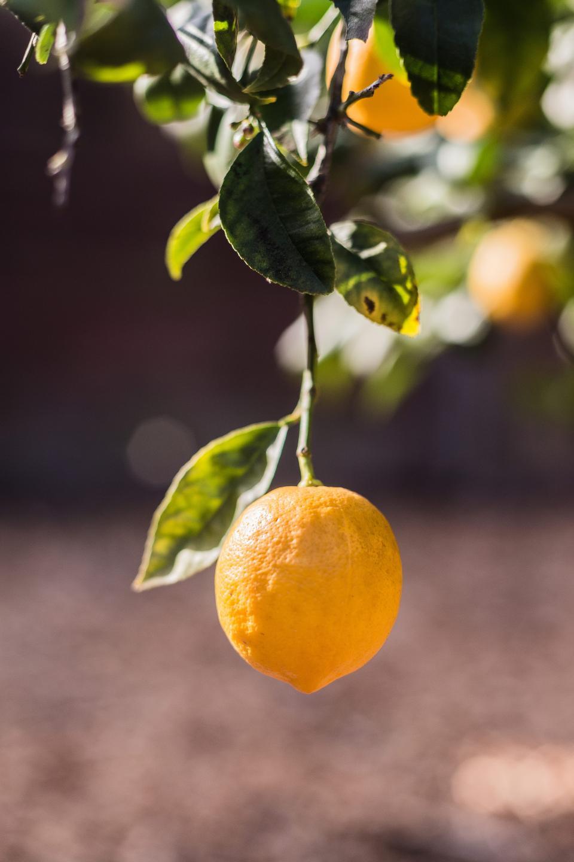 lemons, trees, fruits