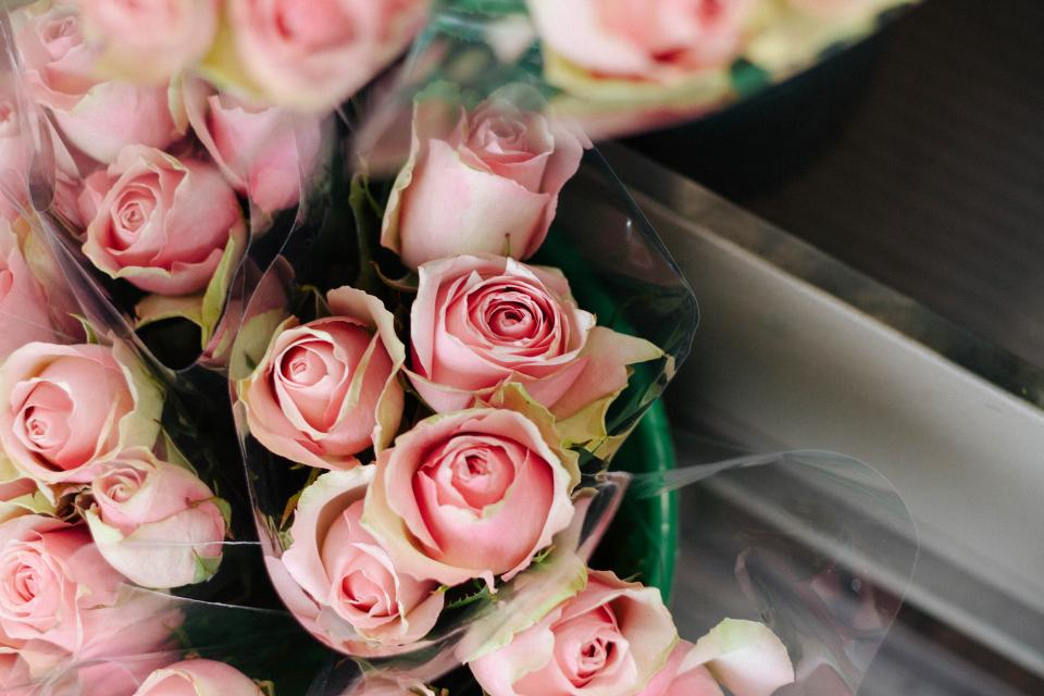 pink, roses, flowers, bouquet