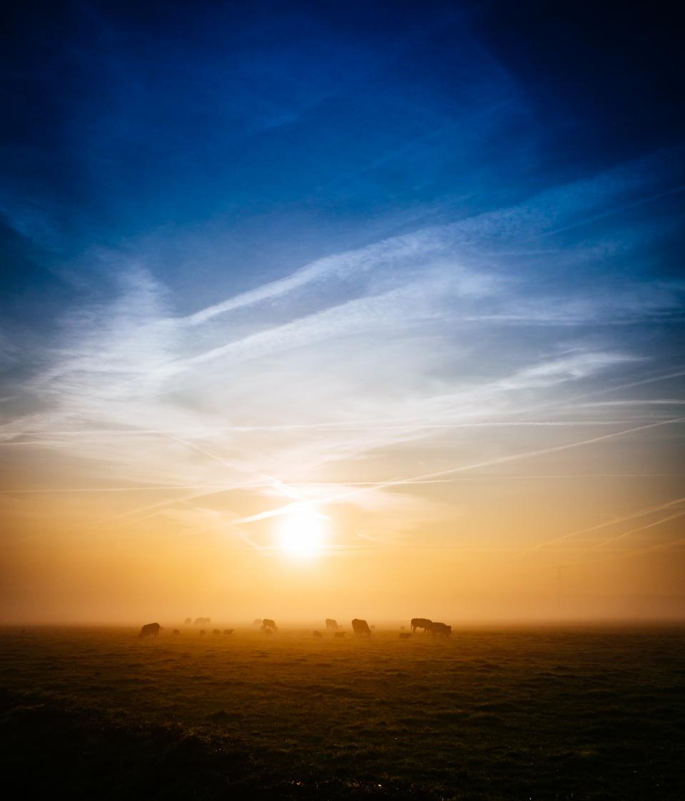 sunrise, morning, dawn, field, grass, animals, farm, rural, countryside, sky, clouds, nature, landscape