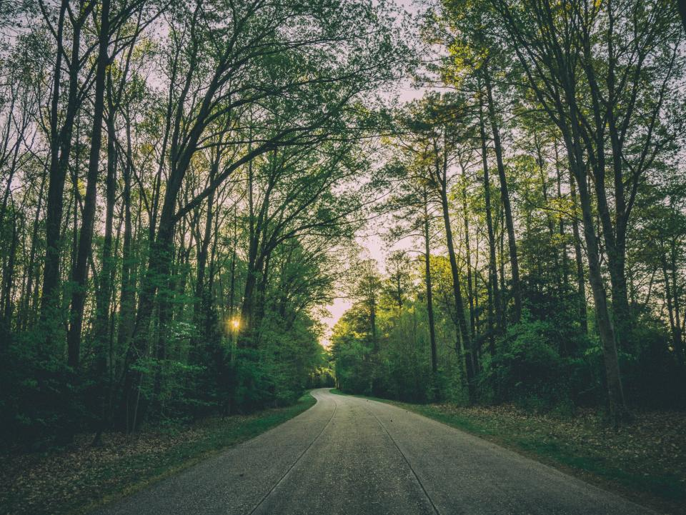 rural, road, countryside, trees, forest, woods, leaves, branches, sunset, nature