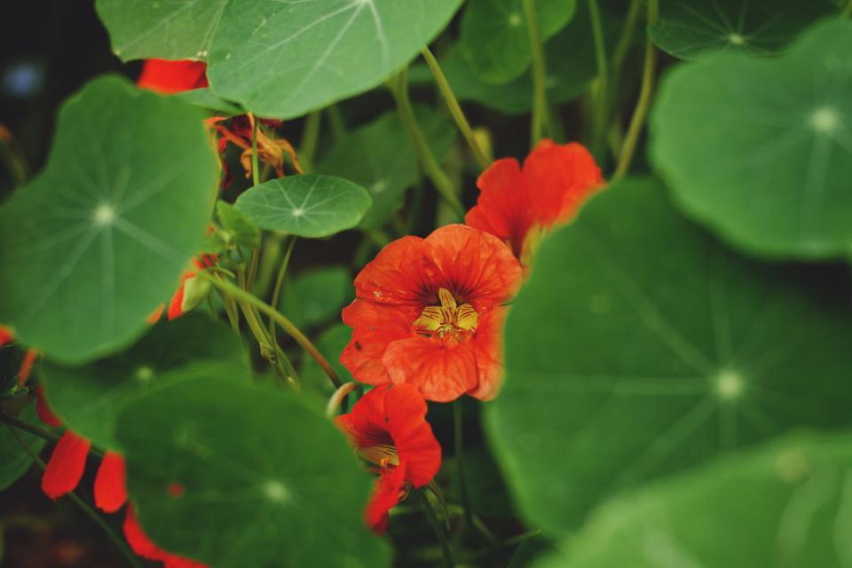 flowers, garden, plants, nature