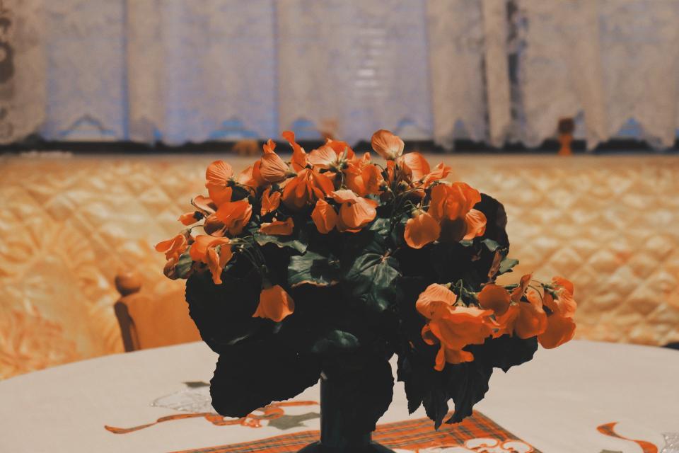 orange, flowers, vase