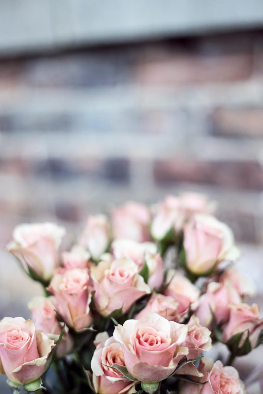 flowers, nature, blossoms, stems, stalks, bouquet, pink, petals, still, bokeh