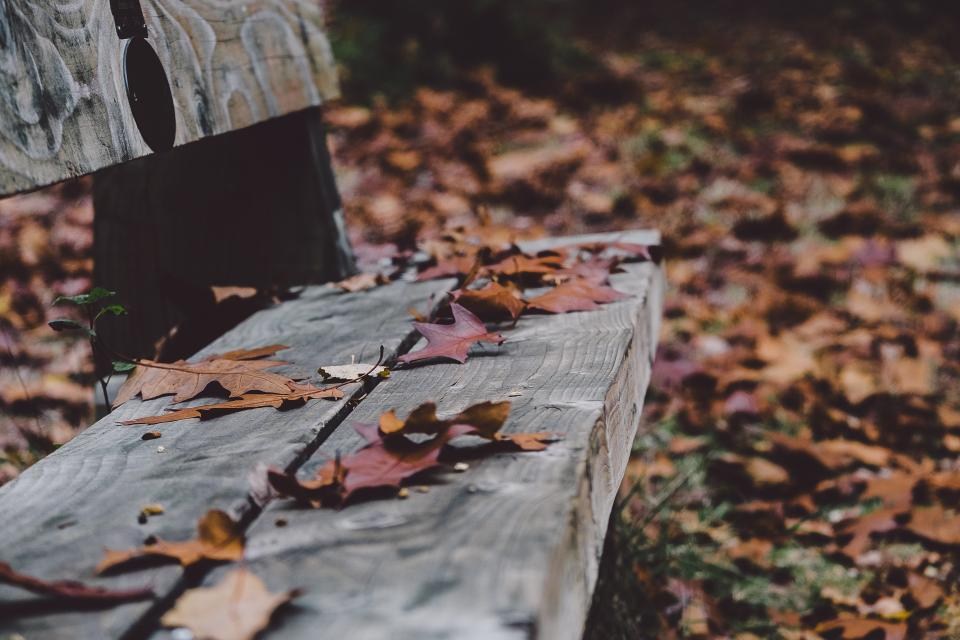 wood, bench, park, leaves, fall, autumn, nature